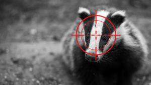Badgers are still being SENSELESSLY MURDERED by the thousands for absolutely NO PURPOSE! 5