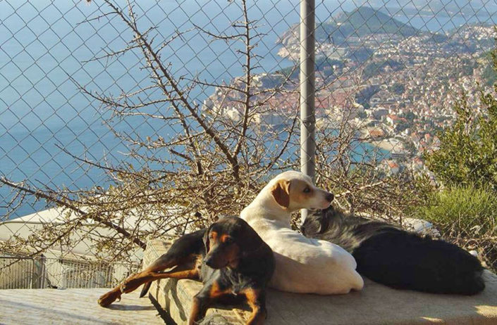 Potential site for new animal shelter visited by mayor of Dubrovnik