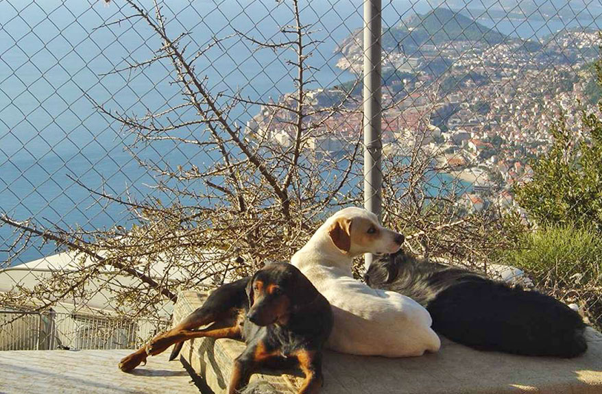 Potential site for new animal shelter visited by mayor of Dubrovnik 1