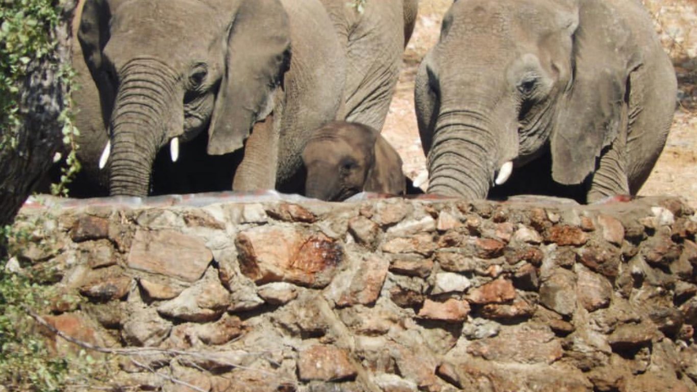 We MUST act NOW to give this family of 20 elephants a future! Help us reach our goal! 1