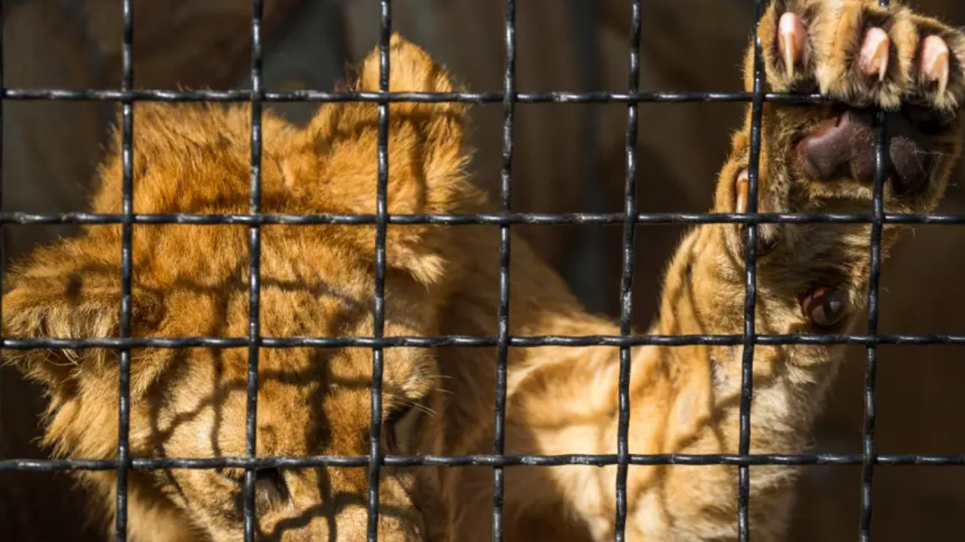 It is not too late to SAVE ANIMALS FROM EXTINCTION! But we URGENTLY need your help now! 2