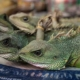 Illegal Wildlife Trade Set To Boom Once COVID-19 Restrictions Are Lifted 3