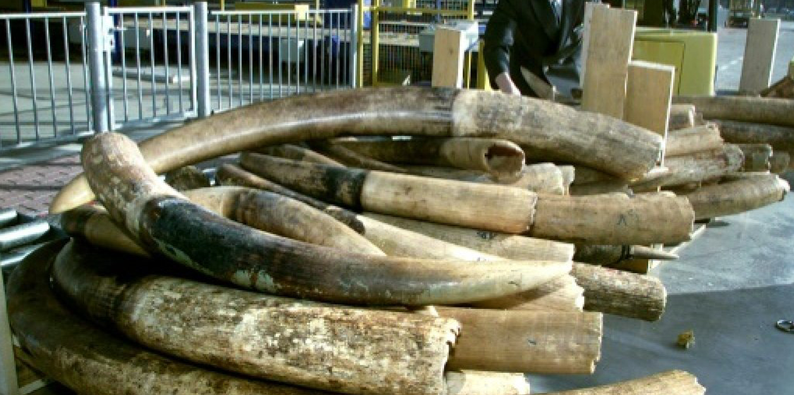 UK introduces strict ban on sale of ivory 1