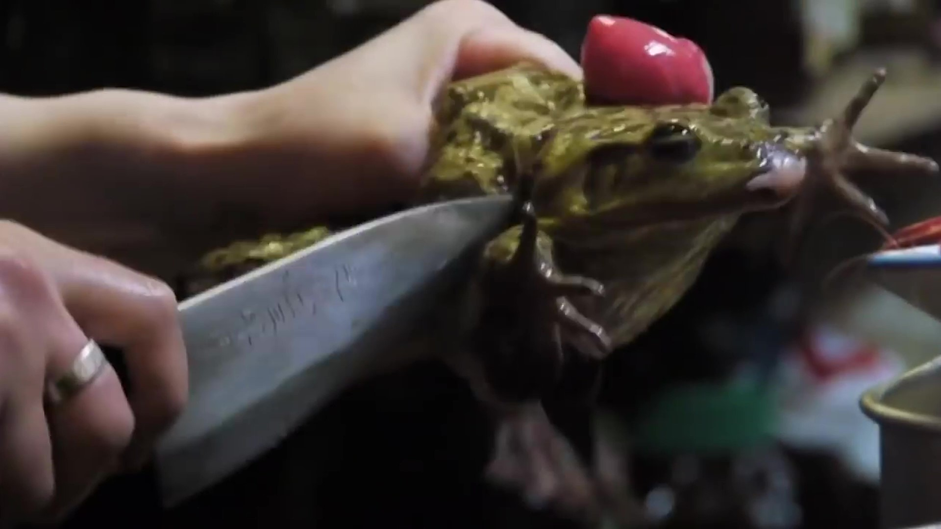 EATEN TO EXTINCTION! Millions of frogs are being tortured, maimed and killed - for the dinner table! 2