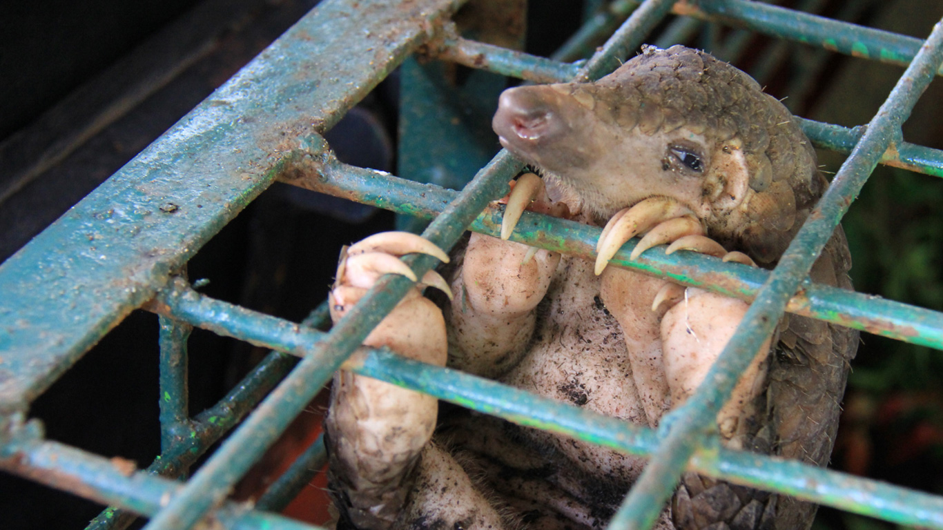 It is not too late to SAVE ANIMALS FROM EXTINCTION! But we URGENTLY need your help now! 3