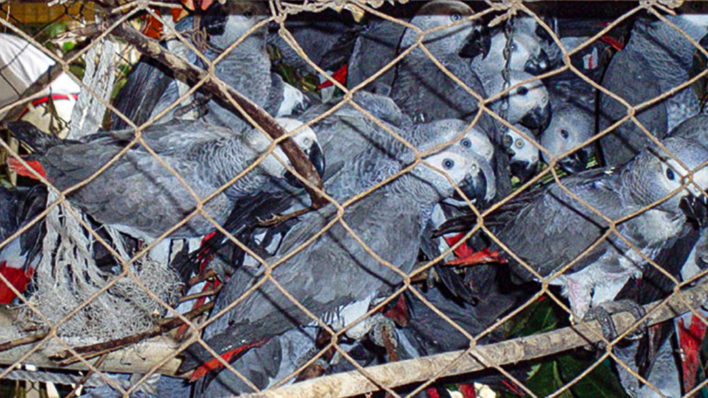 It is not too late to SAVE ANIMALS FROM EXTINCTION! But we URGENTLY need your help now! 7