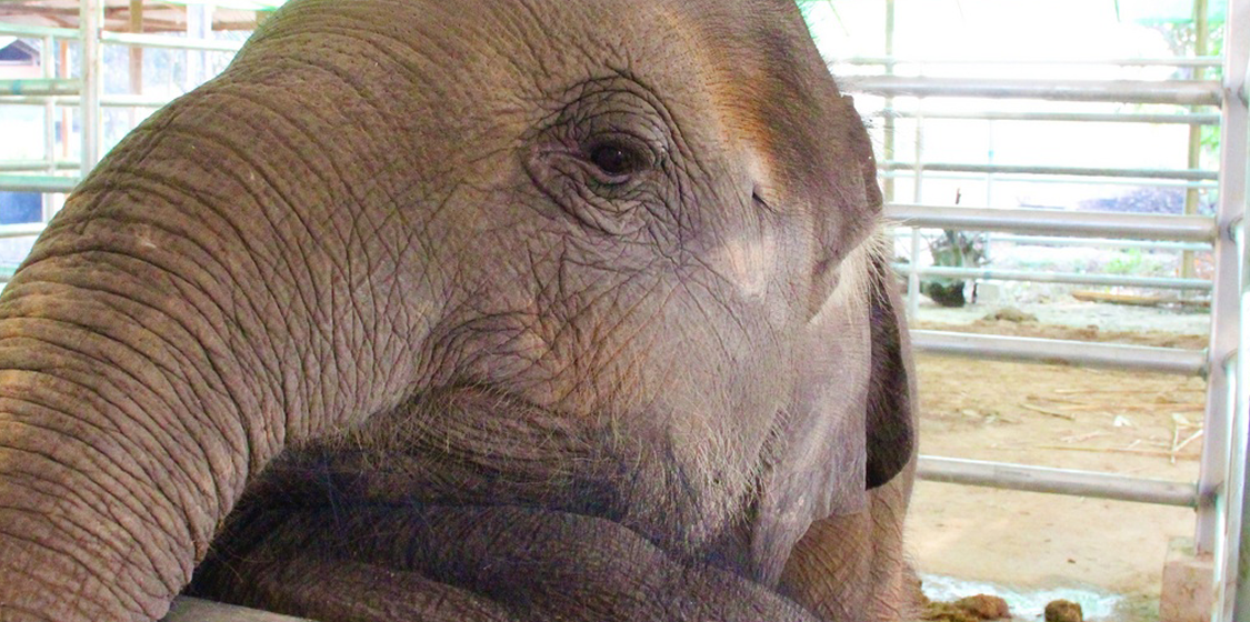 35 more baby elephants being sent from Zimbabwe to lives of hell in China 1