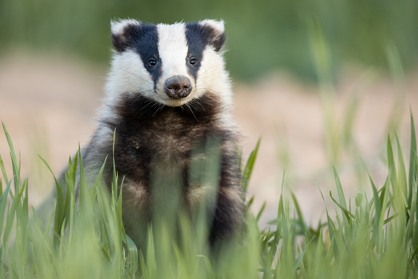 9,144 people have signed our badgers petition - help us reach 10,000! 2