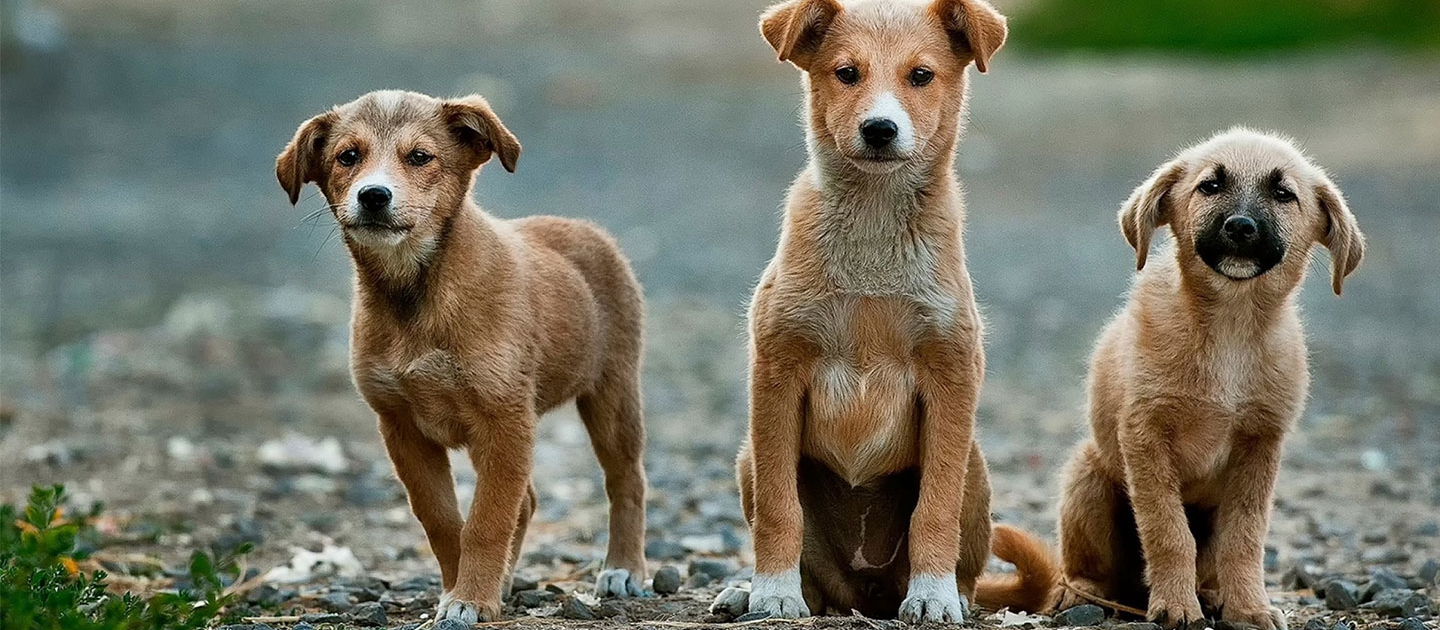 Looming Brexit could be a disaster for animals 1
