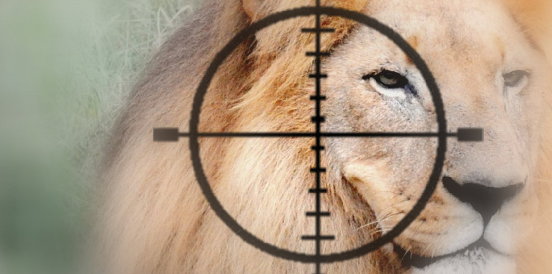 Canned Lion Hunting 1