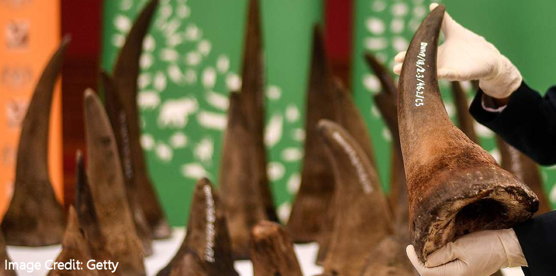 Rhino horn among quack health remedies touted to cure Covid-19 1