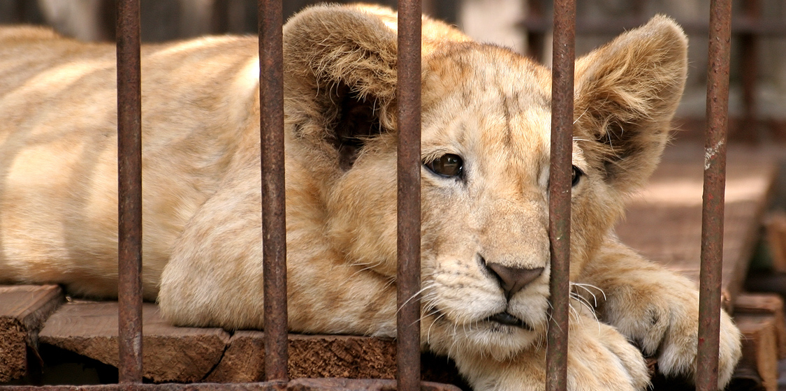 South Africa's Despicable Live Wildlife Trade With China 3