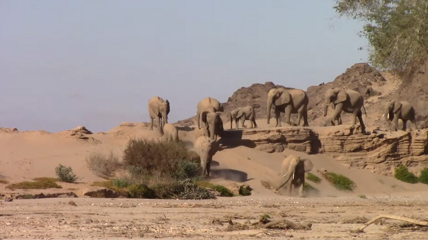 We've struck water, but it's not a home run – yet! Namibia's elephants are STILL AT RISK! 5
