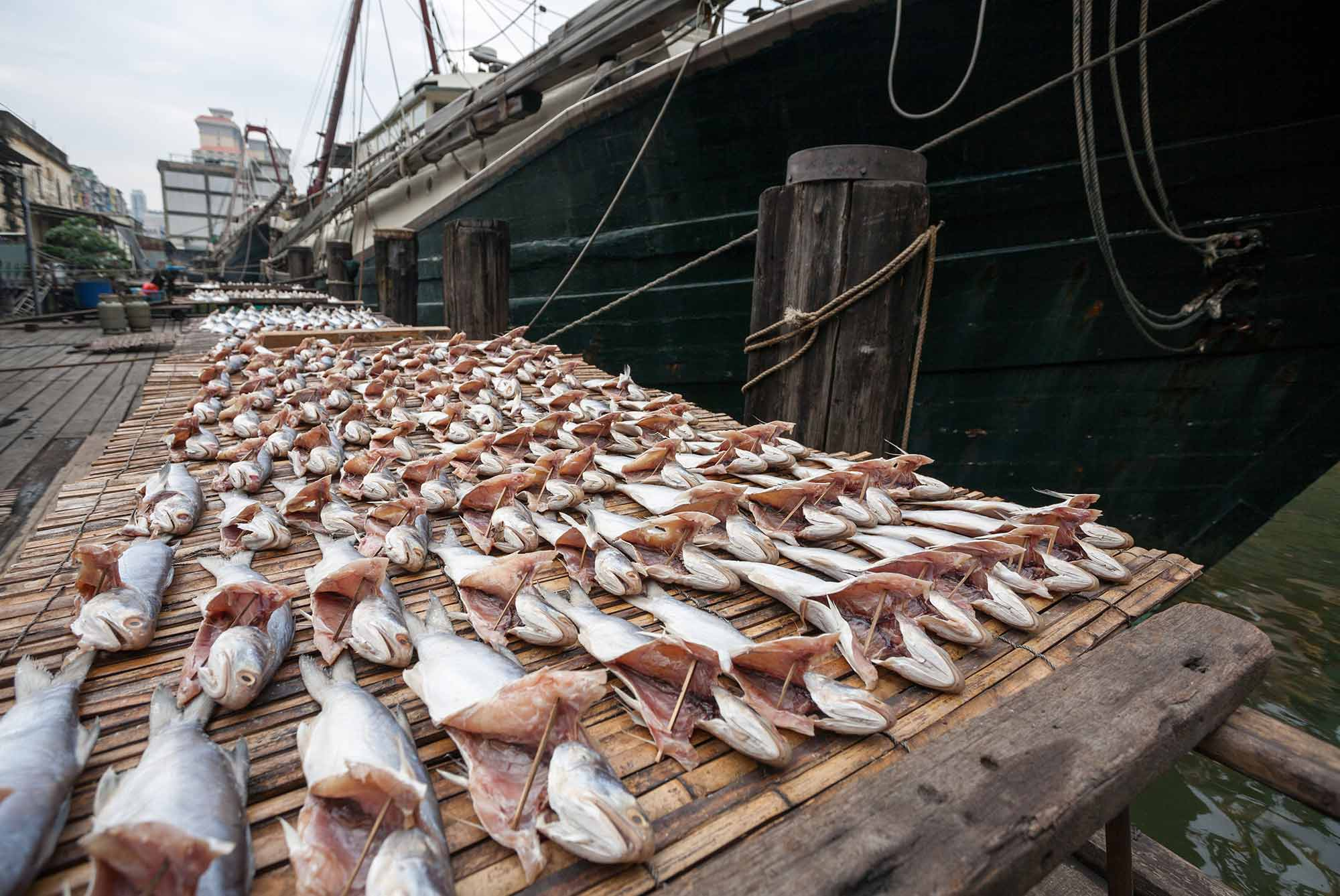 PAL calls on China to protect the bounty of our oceans or nations will flounder 1