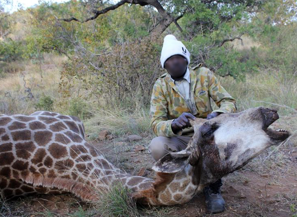 WICKED SNARES kill giraffes for food and tourist trinkets! 1