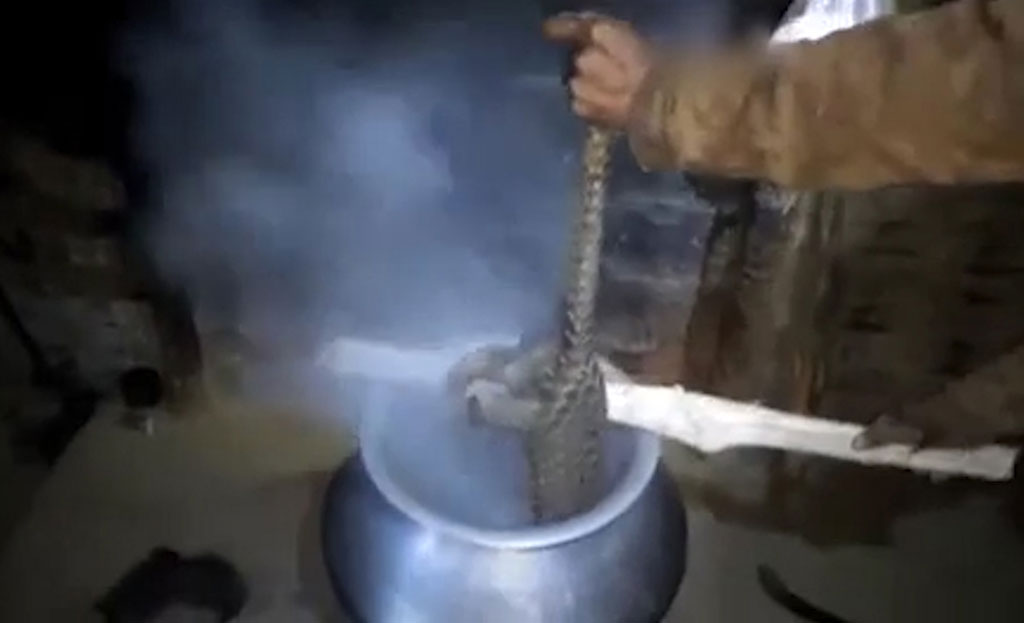Pangolins: smoked from their homes, beaten, tortured and burnt alive – for phony Asian medicines! 2