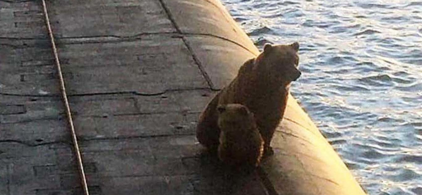 Mamma Bear And Her Cub's Tragic Final Moments Before Being Shot Dead 1