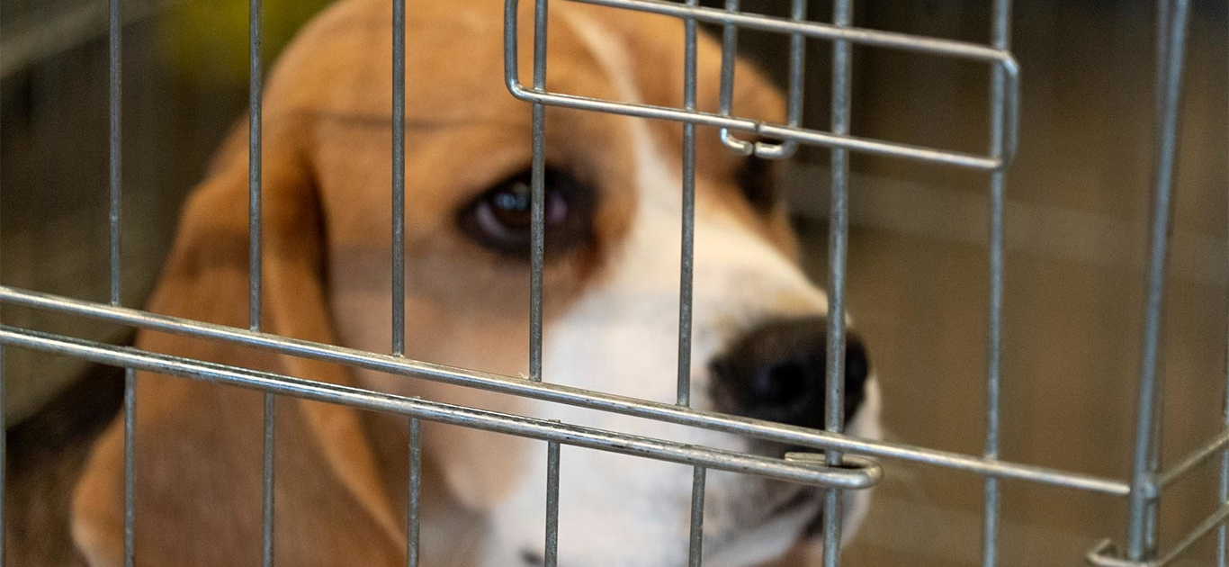 PAL Salutes Congress Members Committed To Ending The FDA's Dog Testing Mandate 1