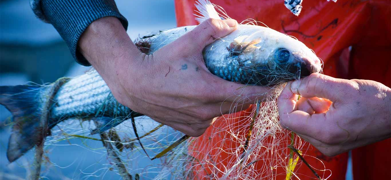 Organized Crime In The Fisheries Sector Threatens A Sustainable Ocean Economy 1