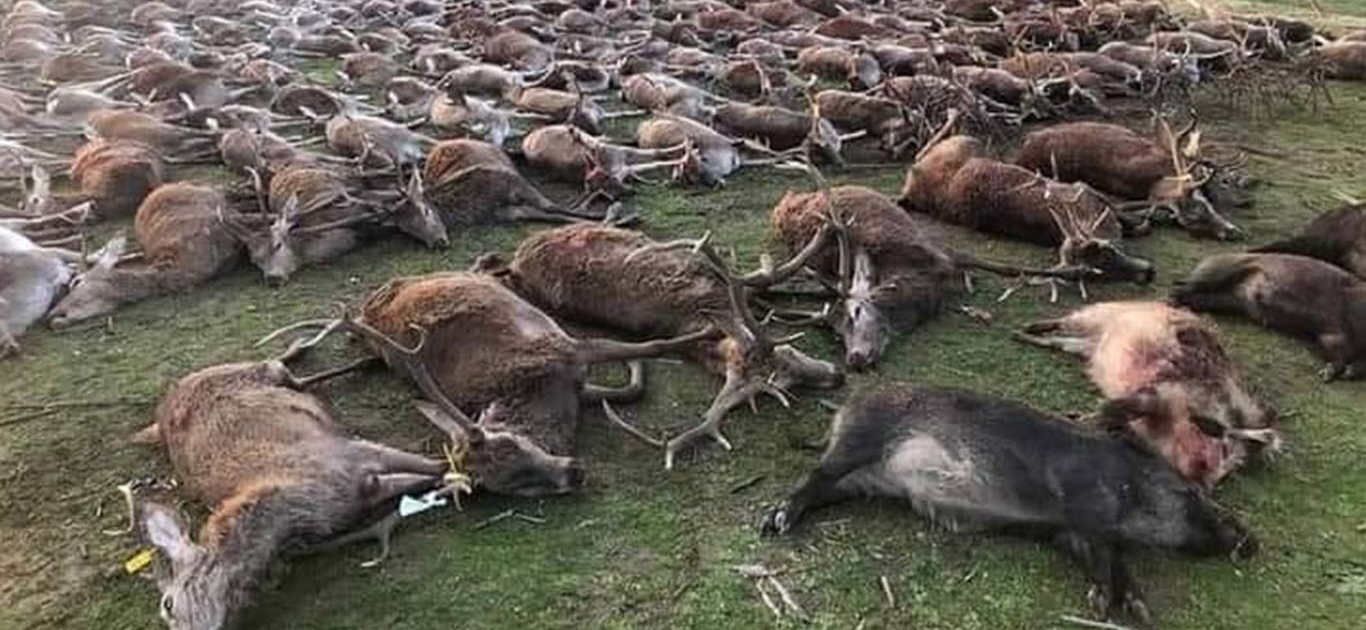 Heartbreak As Over 500 Wildlife Shot Dead By Hunters In Portugal 1