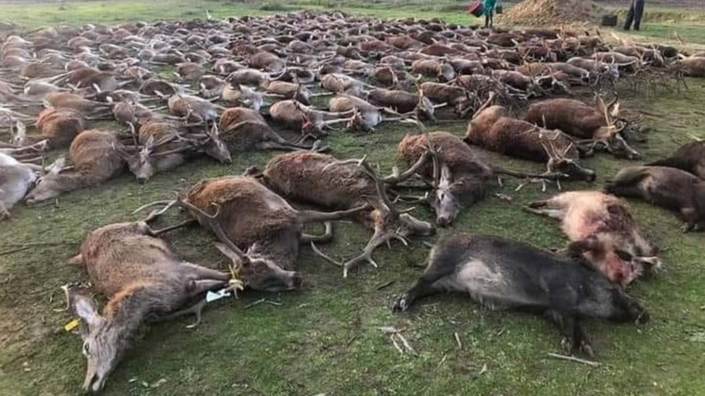 Shocking Evidence Reveals Hunting Fraternity Flouting The UK's Hunting Ban 2