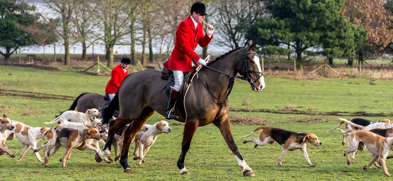 Shocking Evidence Reveals Hunting Fraternity Flouting The UK's Hunting Ban 1