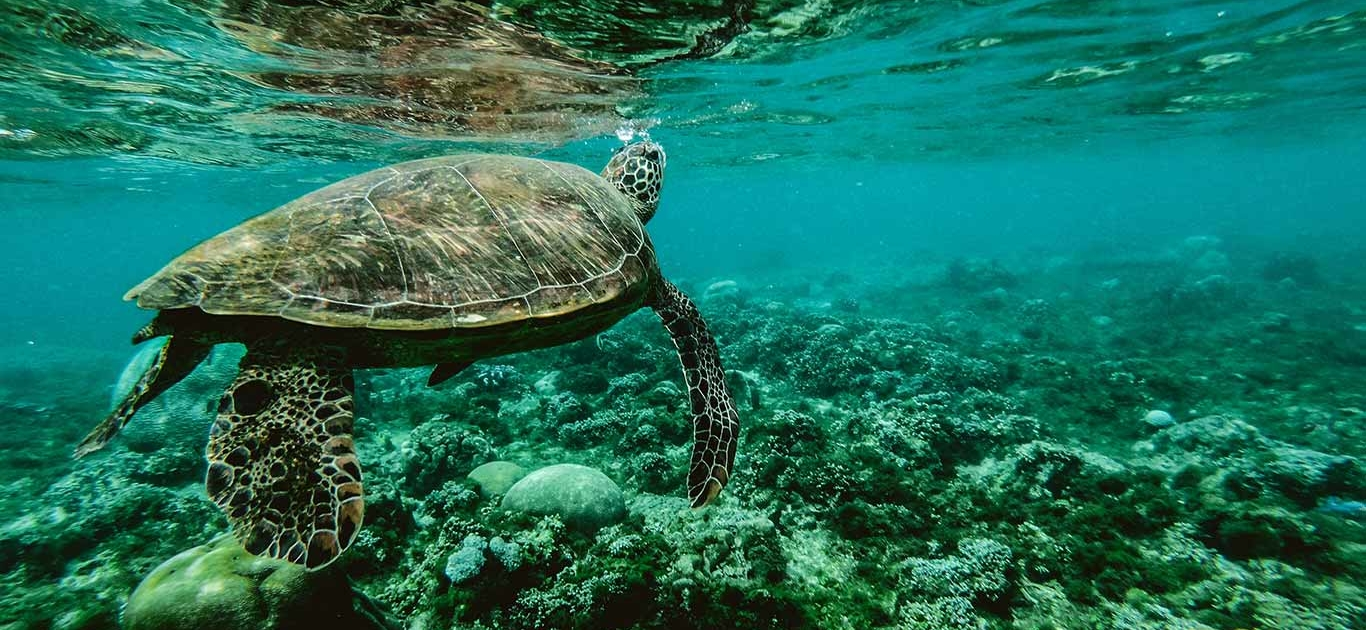 There Is A Way To Help Save Marine Life. Stop All The Noise! 1