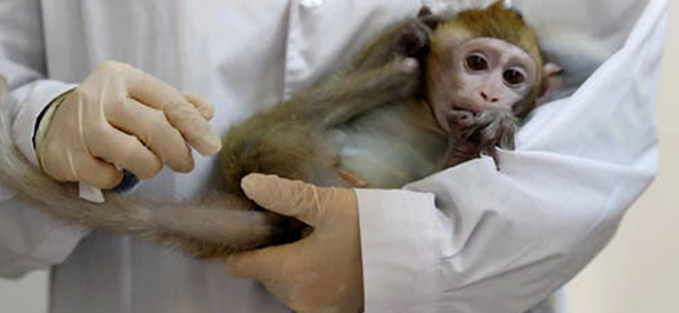 America Is Running Low On Monkeys To Exploit For COVID-19 Vaccine Tests 1