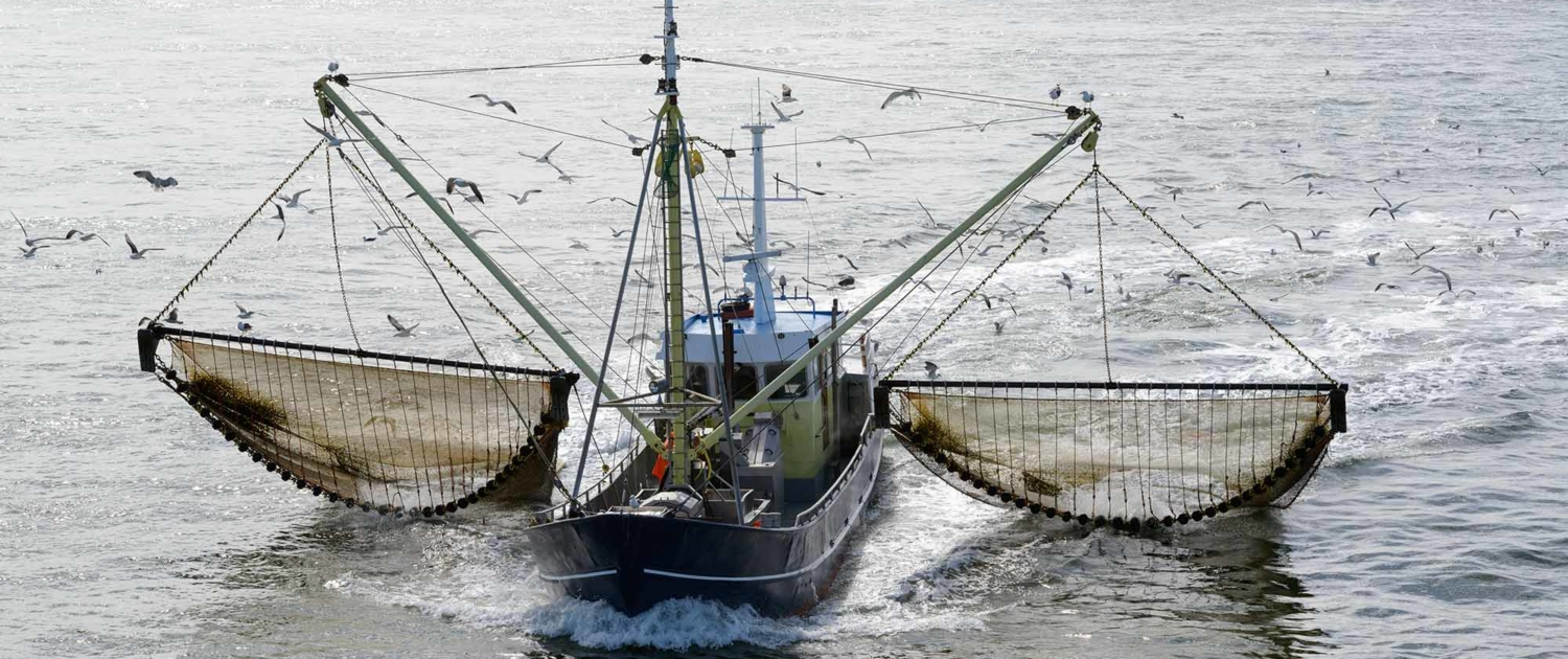 PAL calls on China to protect the bounty of our oceans or nations will flounder 3