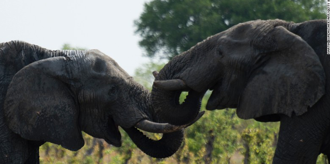 A crime of reporting: Inaccurate media failing Zimbabwe's elephants 1